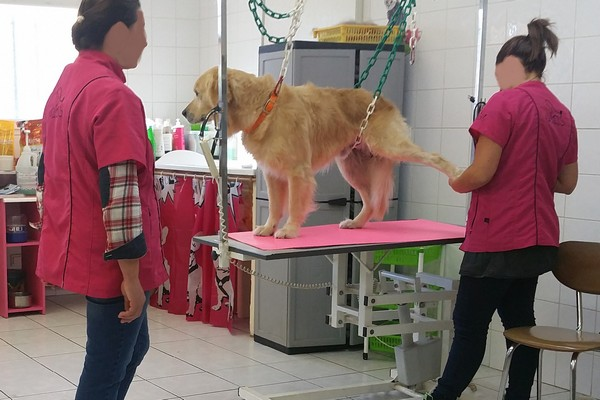 Programme de formation au toilettage canin ftc07 for Salon du chien